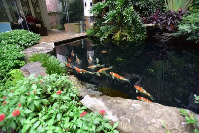 Cách làm hệ thống lọc nước hồ cá koi đơn giản nhất