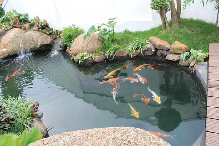 Giá bán cá koi Nhật Bản trên thị trường hiện nay
