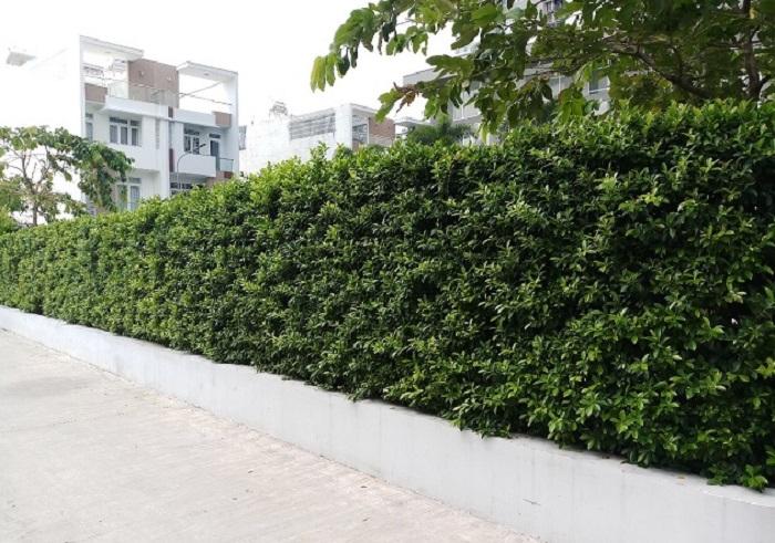 Quy trình thi công tường lá cây giả tại quận 8