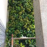 Thi công  tường cây giả ở quận Bình Tân