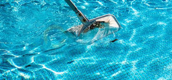 vợt rác hồ bơi Midas
